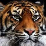 Había una vez un tigre, de Francisco Massiani
